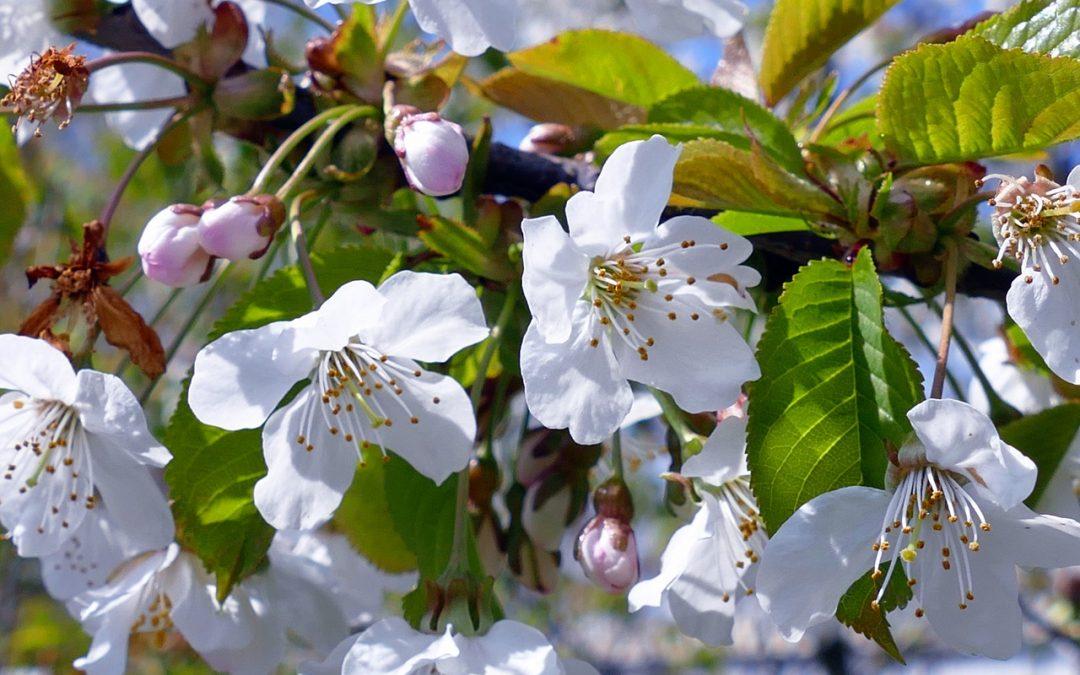 Le printemps arrive, et les pollens aussi